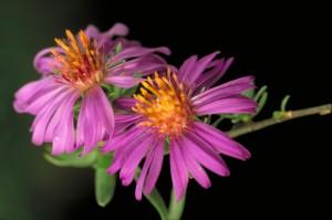 macro, photographie, photos, plantes
