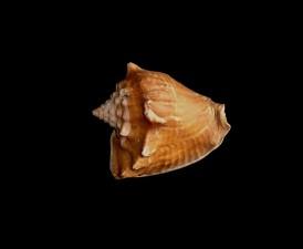 havet, shell, fotograf, studio