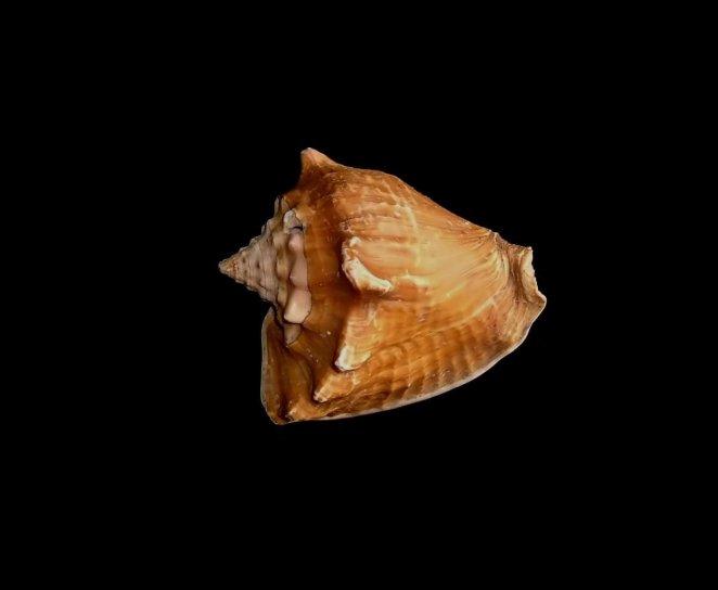 sea, shell, photographer, studio