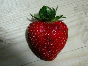 strawberry, fruit, studio