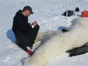 polar, oso, biólogo, etiquetas, sangre, muestras, oso