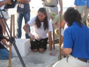 trained, sea, turtle, volunteer, gingerly, handles, egg