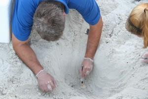 помощник, руководитель, знаки, яйцо, песок
