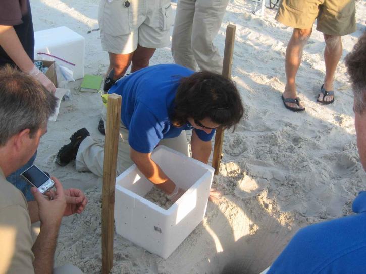 biologiste, fouilles, dent, sable, oeuf
