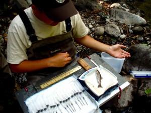 biologo, misura, pesce, esperimento
