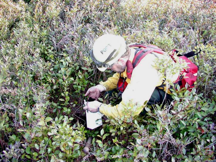 biologiste, moniteurs, la végétation, la repousse, prescrite, la combustion, la zone