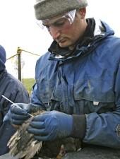 biologiste, écouvillons, oiseau, essais