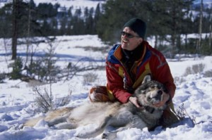 biologist, gray wolf, canis lupus