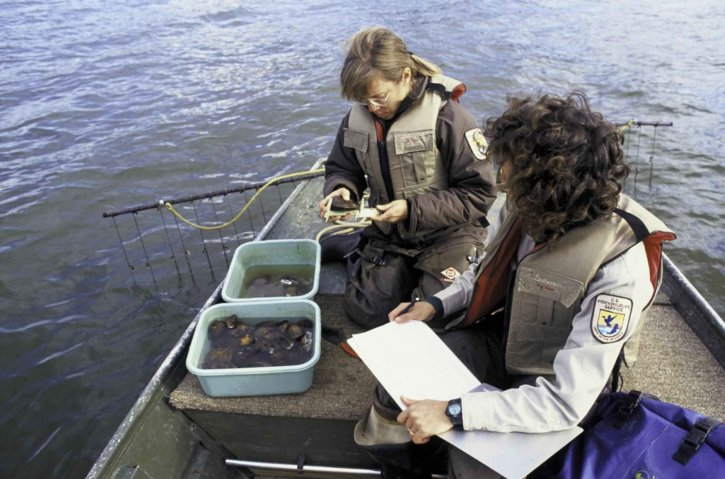 biologistes, inspecter, l'eau douce, les moules