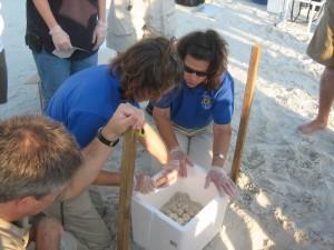 des biologistes, des conditions, mer, tortues, oeufs
