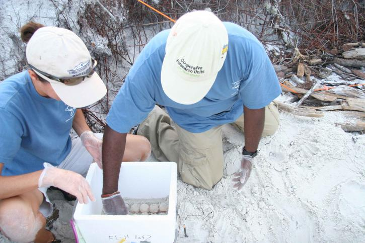 biologists, scientists, digging, eggs, sand