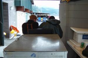 cubos, fertilizado, huevos, transportado, carrito