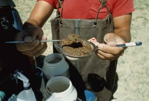 collecting, wetland, samples, microbiologist