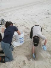 kopanie diery, piesok, pláž