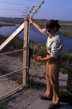 employee, inspects, predator, proof, fence