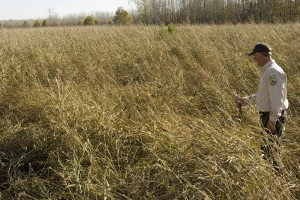 employee, acres, autumn, dried, johnson, grass