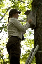 employee, stands, ladder, check, northern flying, squirrel, nest, box