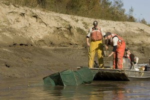 employés, bateau, sein, érodée, banque, missouri, rivière, étude, la vie aquatique