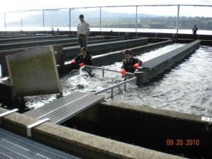 empleados, pistas de rodadura, agua