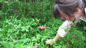 female, botanist, examine, mountain, sweet, pitcher, plant