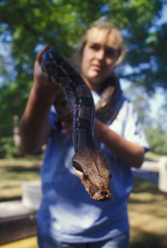 female, holds, large, snake