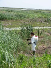 female, nature, spraying, invasive, plants