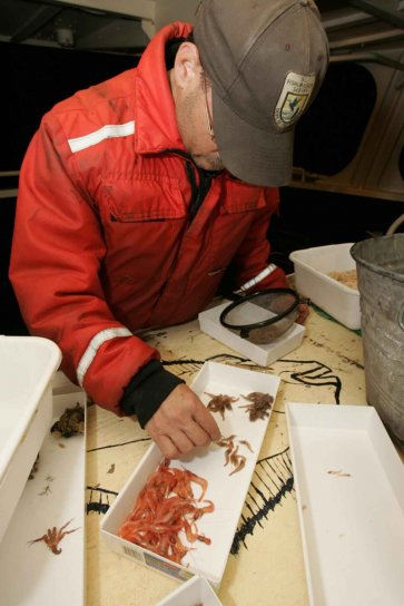 fish, biologist, working