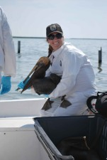 fisheries, biologist, holds, oiled, brown, pelican, rescued