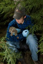 man, holding, Canada, lynx, kitten, lynx, canadensis