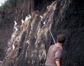 man, trying, catch, birds, telescope, net
