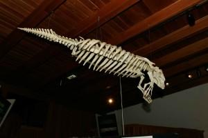 manatee, skeleton