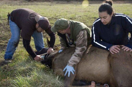 people, holding, elk, ground