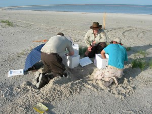 personnel, excavate, sea, turtle, nest