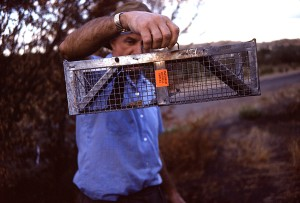 photograph, shows, trapped, field, mouse