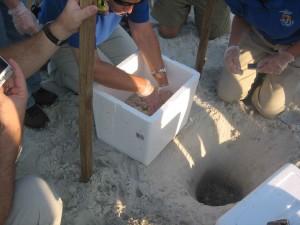 mise en place, les œufs, le sable, la plage, les gens, la prudence, les soins