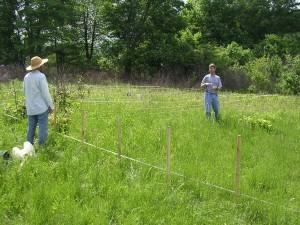 population, surveillance, vert, cruche, plante, sarracenia, oreophila