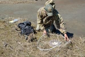 scientist, catches, eggs, examine
