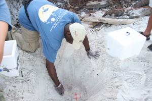 nhà khoa học, khai quật lên, trứng, cát