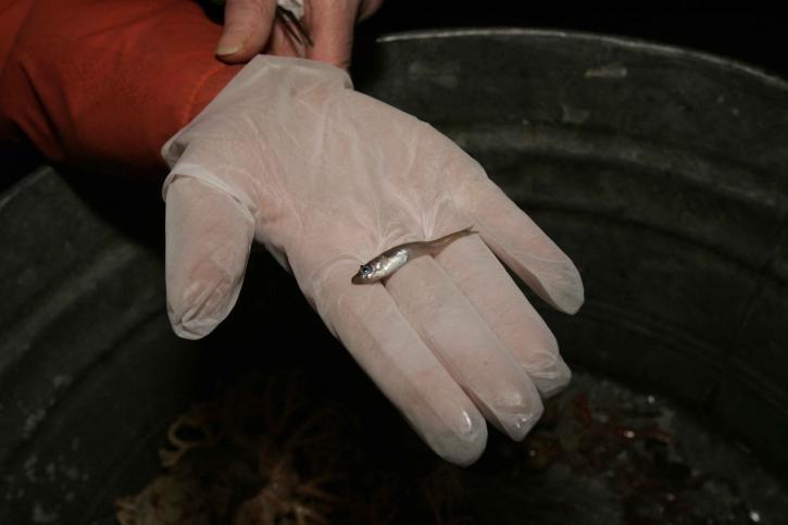 scientifique, tenue, petit poisson, la main