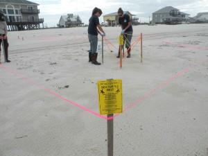 scientifiques, travail, plage, mer, tortue, nid