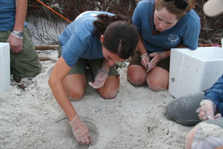 zee, schildpad, ei, verplaatsing