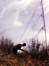 individual, removing, bird, net
