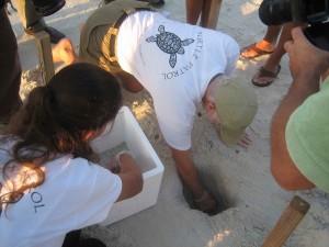 entrenados, voluntarios, vital, importante, el éxito, mar, tortuga, nidos, la reubicación, el esfuerzo