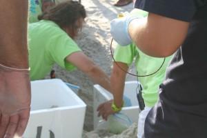 le transport, mer, tortue, oeufs, scientifique, plage