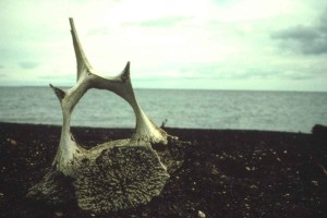 whale, vertebra, bone, beach