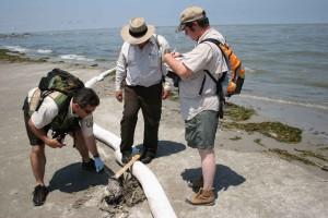 wildlife, biologists, discover, dead, bird