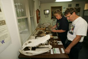 workers, examine, bones