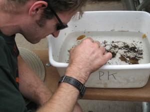 workshop, deelnemer, sorteren, macroinvertebrates