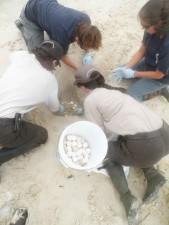 junge Wissenschaftler, Graben, Schildkröte, Eier, Ort, Eimer