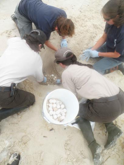 νέοι επιστήμονες, σκάψιμο, χελώνα, αυγά, τόπος, κουβά